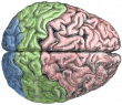 Http ::commons.wikimedia.org:wiki:File Cerebral Lobes.png